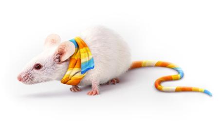 Канцелярская крыса.